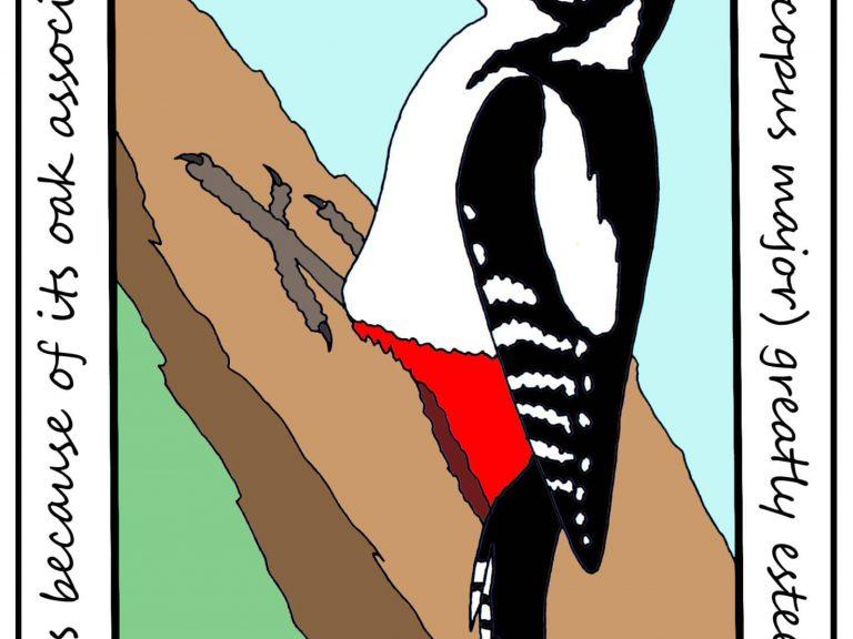 GS Woodpecker - John Clare