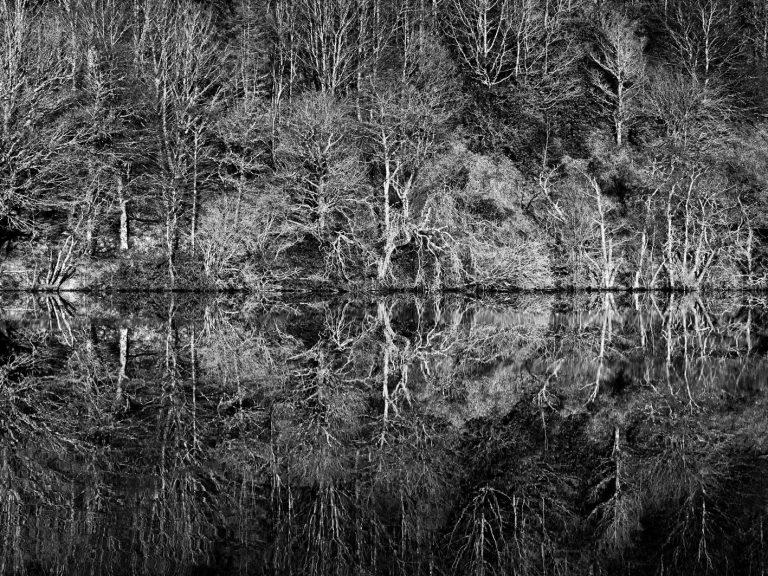 Reflecting Aros - Sarah Darling